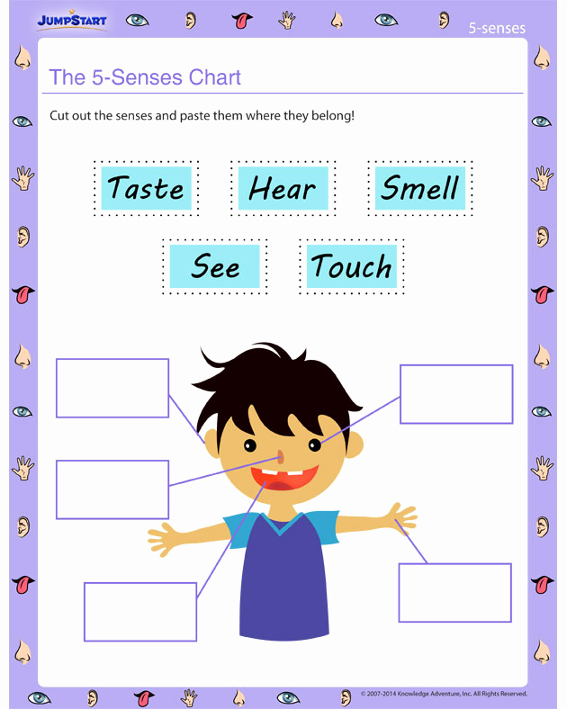 5 Senses Worksheets for Kindergarten Best Of the 5 Senses Chart Worksheet