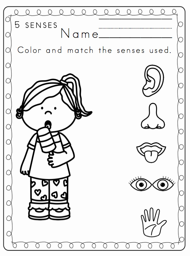 5 Senses Worksheets for Kindergarten Fresh 5 Senses Worksheets