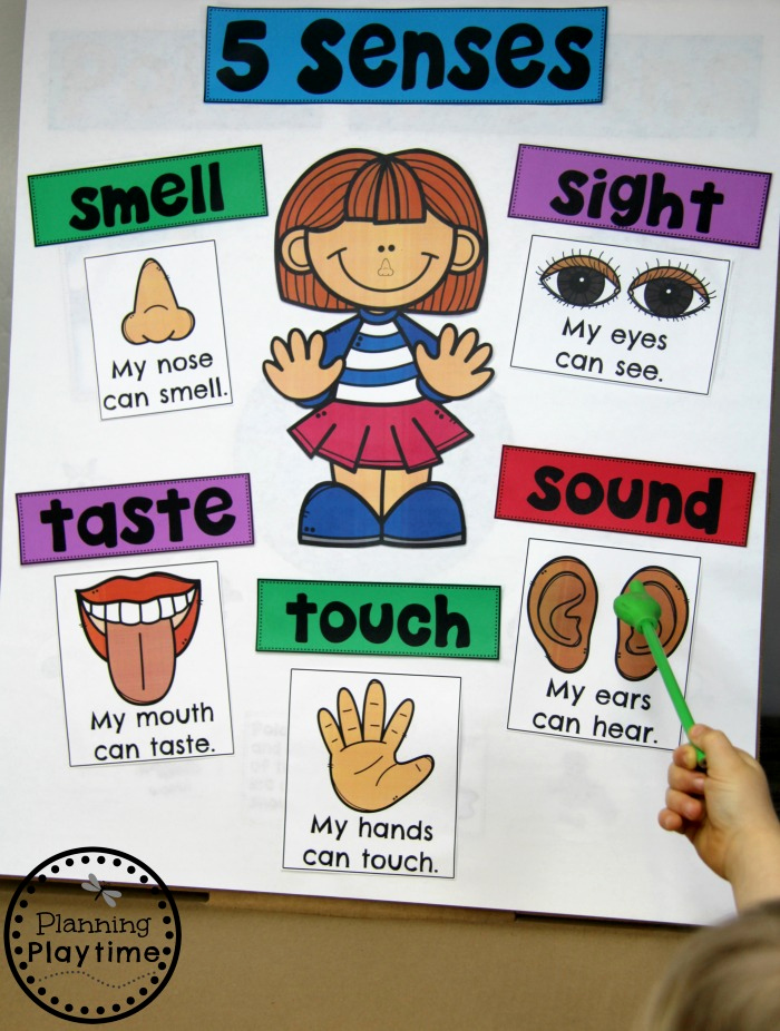 5 Senses Worksheets for Kindergarten Unique 5 Senses Planning Playtime