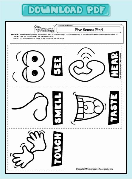 5 Senses Worksheets Pdf Beautiful Five Sense Worksheet New 780 Five Senses Worksheets Preschool
