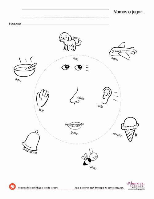 5 Senses Worksheets Pdf Fresh Five Sense Worksheet New 90 the Five Senses Worksheet Pdf