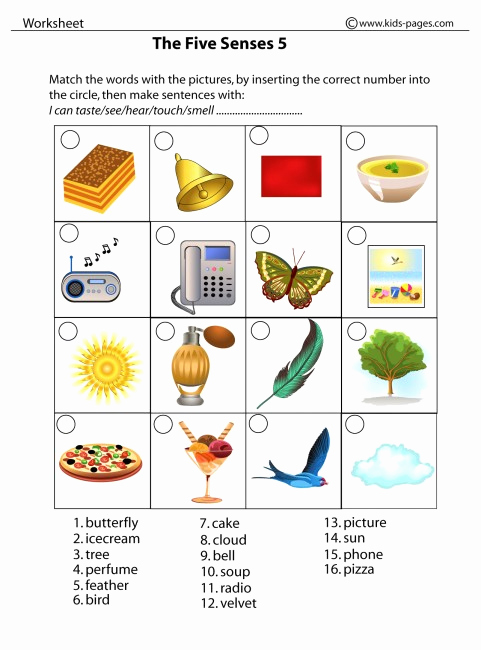 5 Senses Worksheets Pdf Fresh the Five Senses 5 Worksheet