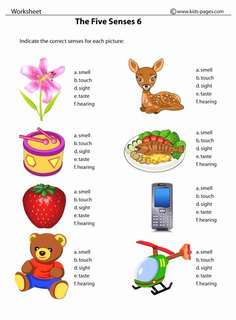 5 Senses Worksheets Pdf Inspirational the Five Senses 6 Worksheet
