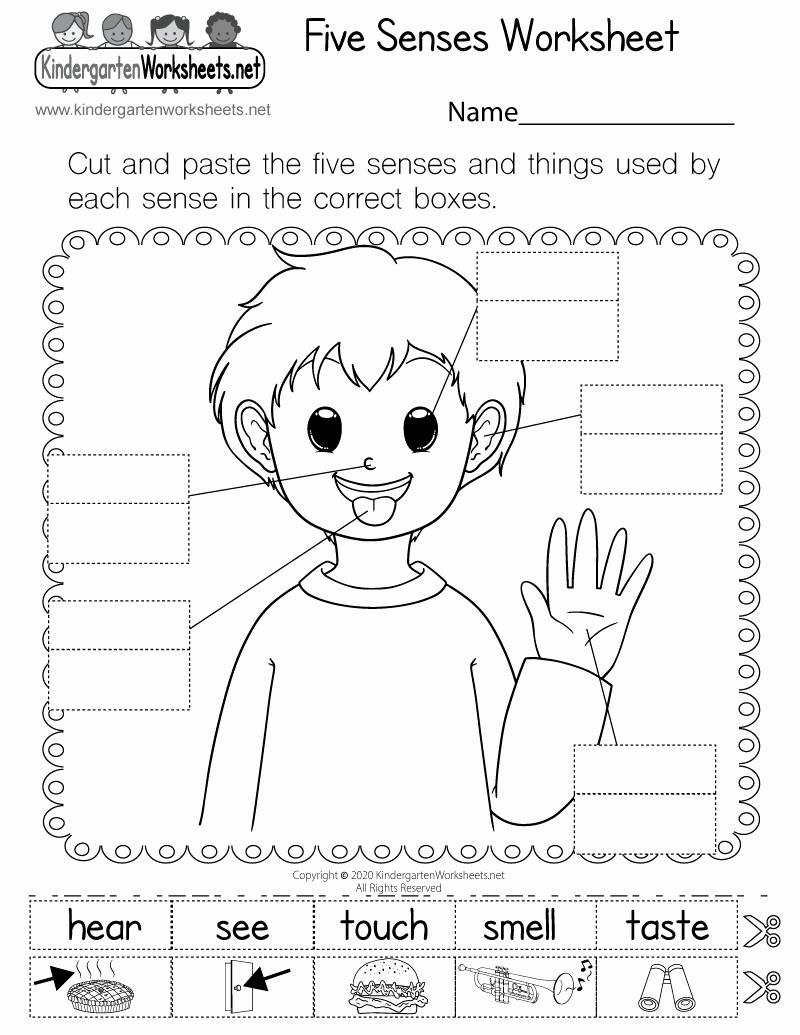 5 Senses Worksheets Pdf Unique Five Senses Worksheet for Kindergarten Free Printable