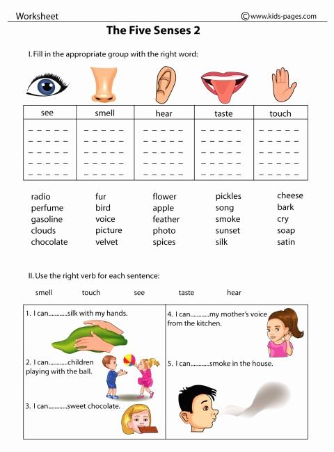 5 Senses Worksheets Pdf Unique the Five Senses 2 Worksheet