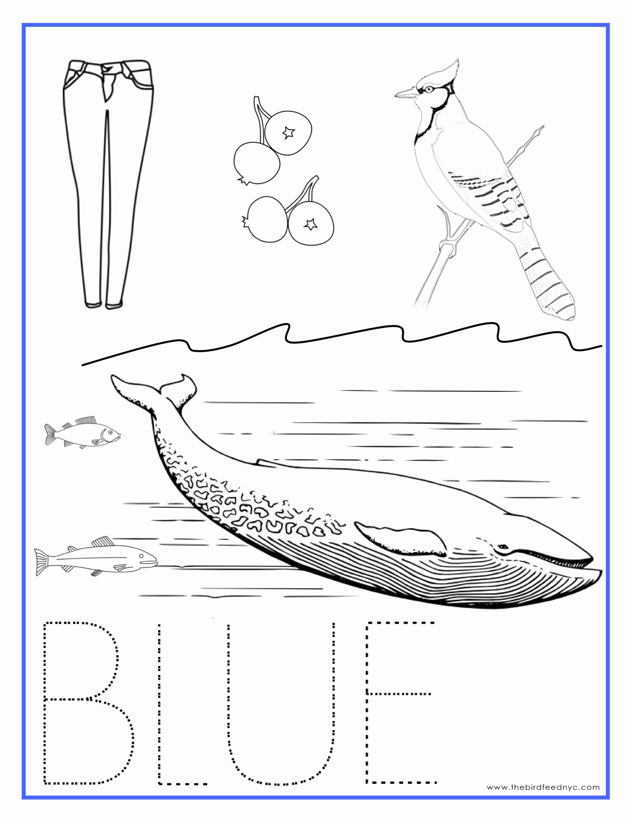 Color Blue Worksheets for Preschool Inspirational Printable Coloring Sheets