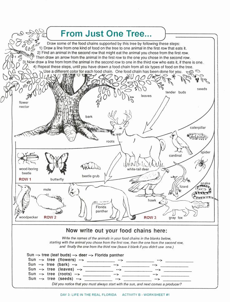 Ecology Worksheets Middle School Best Of De Posers Worksheets for Kids
