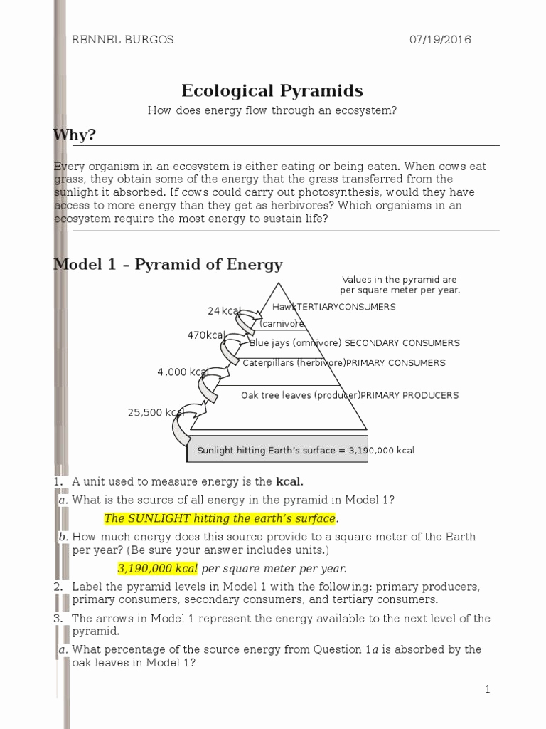 Ecology Worksheets Middle School Luxury Ecology Worksheets Middle School