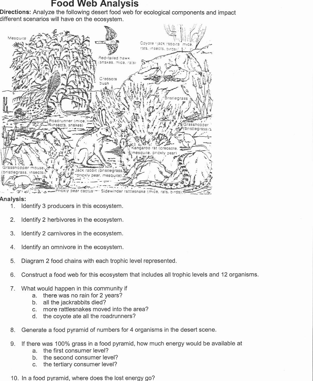 Ecology Worksheets Middle School Unique Ecology Worksheets for Middle School Pdf Ecology Lesson Plans