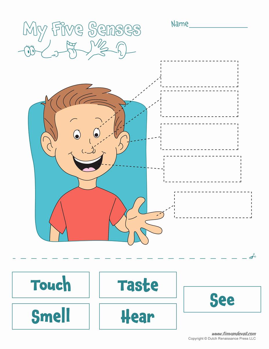 Five Senses Worksheets for Kindergarten Awesome Five Senses Worksheet Tim S Printables