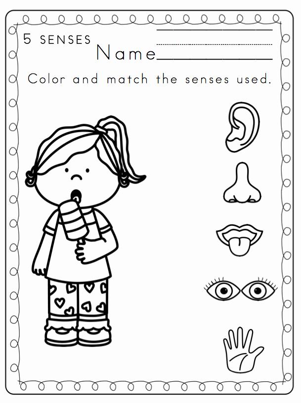 Five Senses Worksheets for Kindergarten Elegant 5 Senses Worksheets