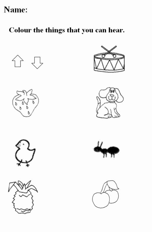 Five Senses Worksheets for Kindergarten Fresh Five Senses Worksheets for Kindergarten