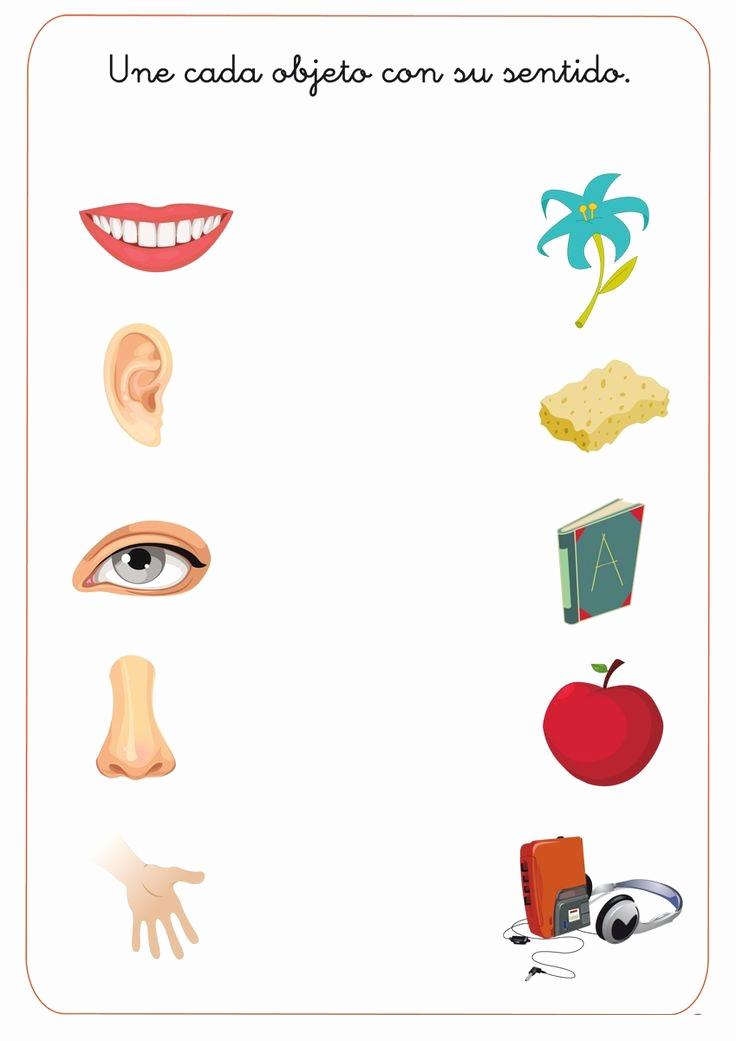 Five Senses Worksheets for Kindergarten Inspirational Crafts Actvities and Worksheets for Preschool toddler and