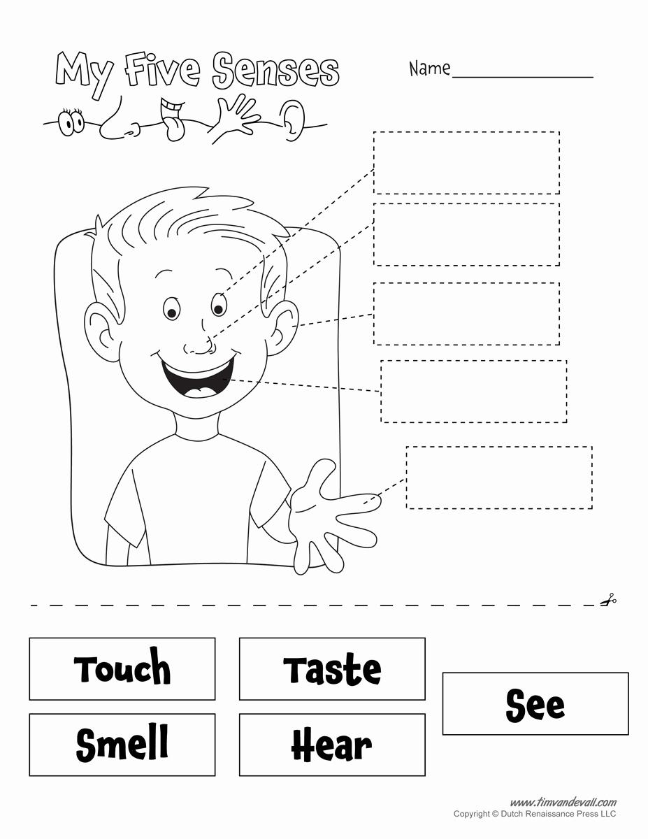 Five Senses Worksheets for Kindergarten Inspirational Five Senses Worksheet Tim Van De Vall