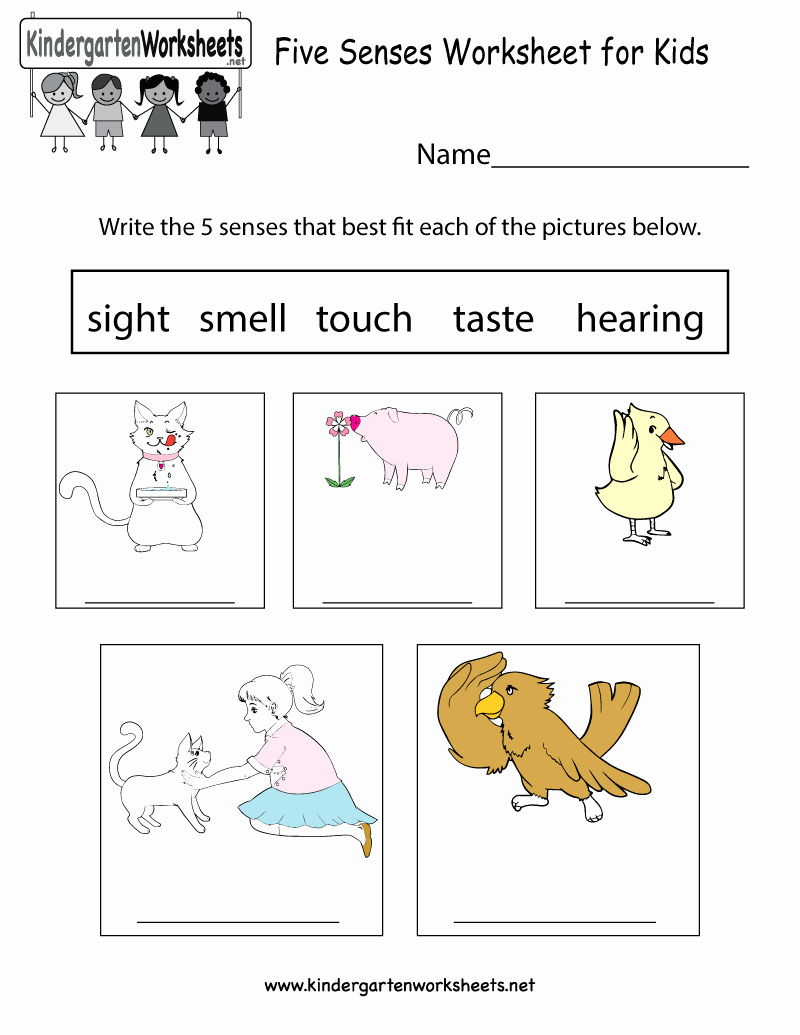 Five Senses Worksheets for Kindergarten Inspirational This is An Easy Way to Learn About Five Senses You Can