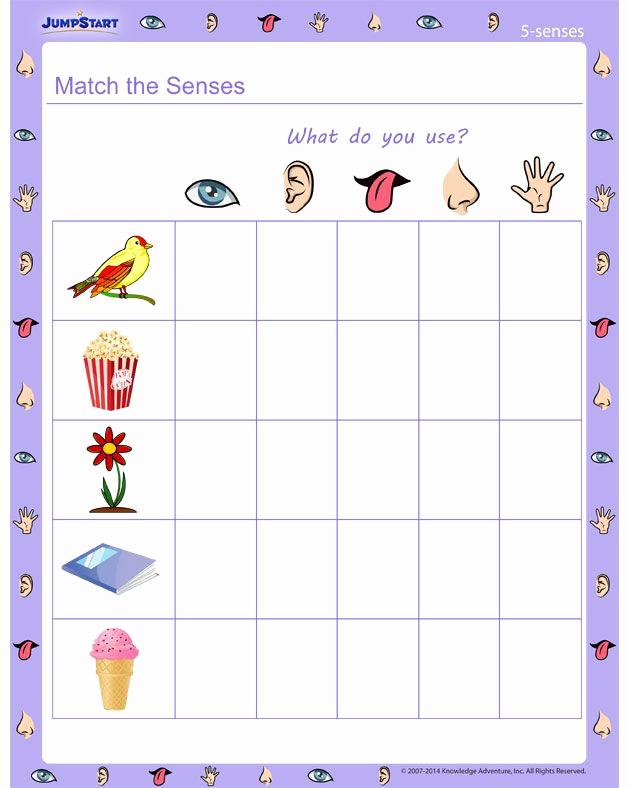 Five Senses Worksheets for Kindergarten Luxury Match the Senses 5 Senses Worksheet