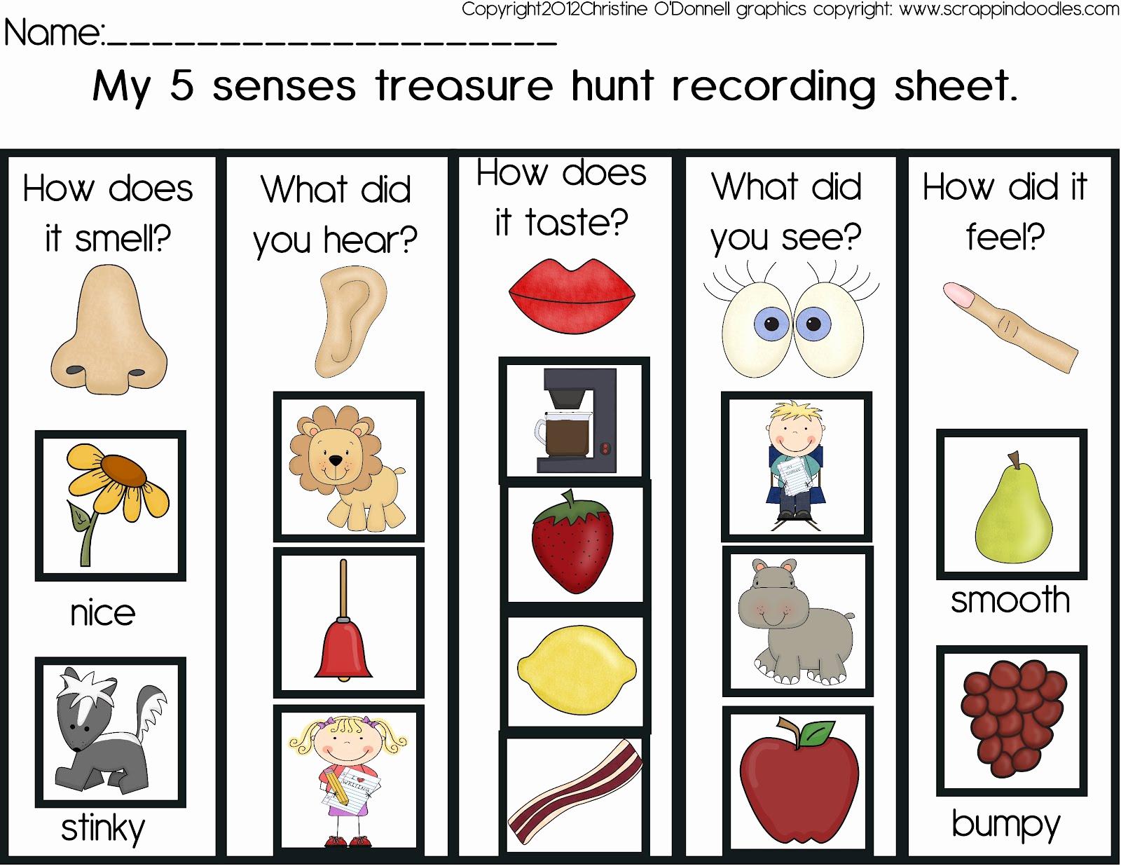 Five Senses Worksheets for Kindergarten New 5 Senses Treasure Hunt and A Freebie