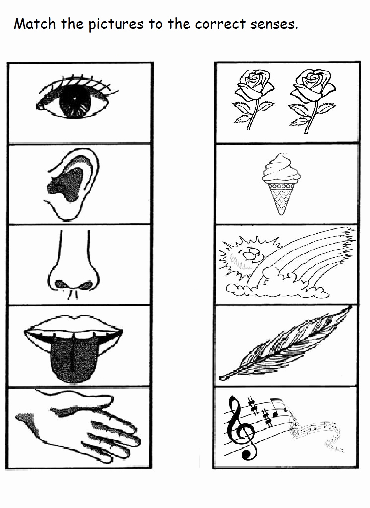Five Senses Worksheets for Kindergarten Unique Crafts Actvities and Worksheets for Preschool toddler and