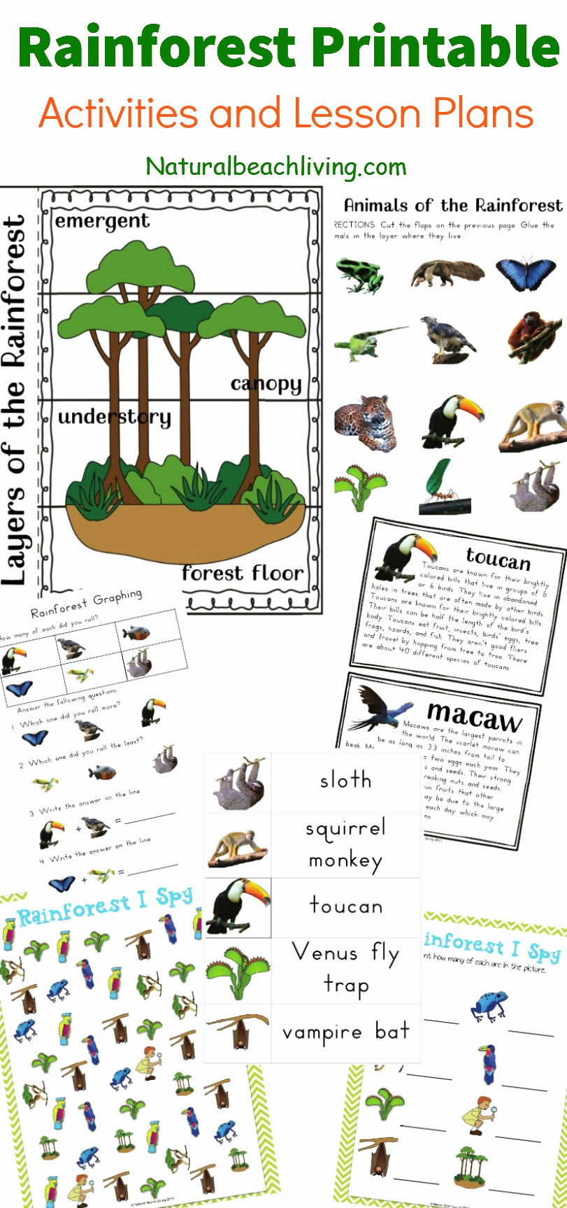 Free Habitat Worksheets Awesome the Best Rainforest Printable Activities for Kids