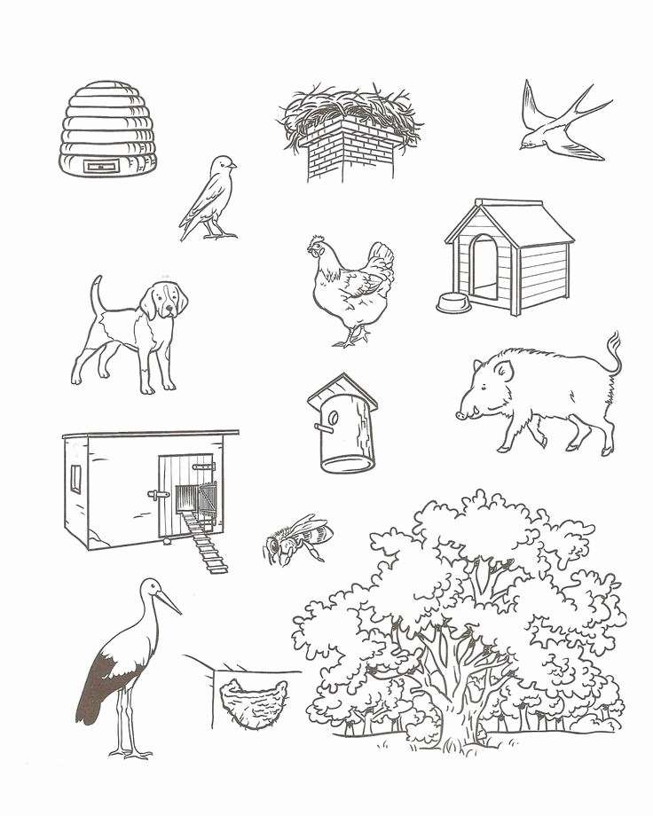 Free Habitat Worksheets Elegant Crafts Actvities and Worksheets for Preschool toddler and