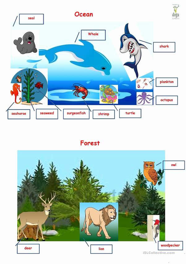 Free Habitat Worksheets Luxury Habitat Worksheet Free Esl Printable Worksheets Made by