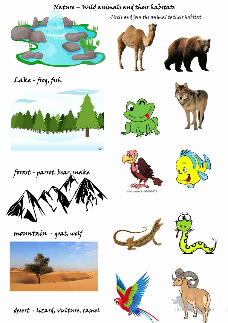 Free Habitat Worksheets Luxury Wild Animals and their Habitats Worksheet Free Esl