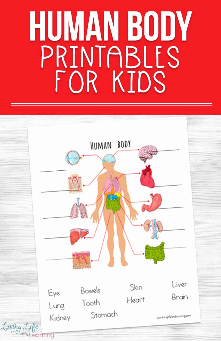 Free Human Body Worksheets Best Of Human Body Printables for Kids