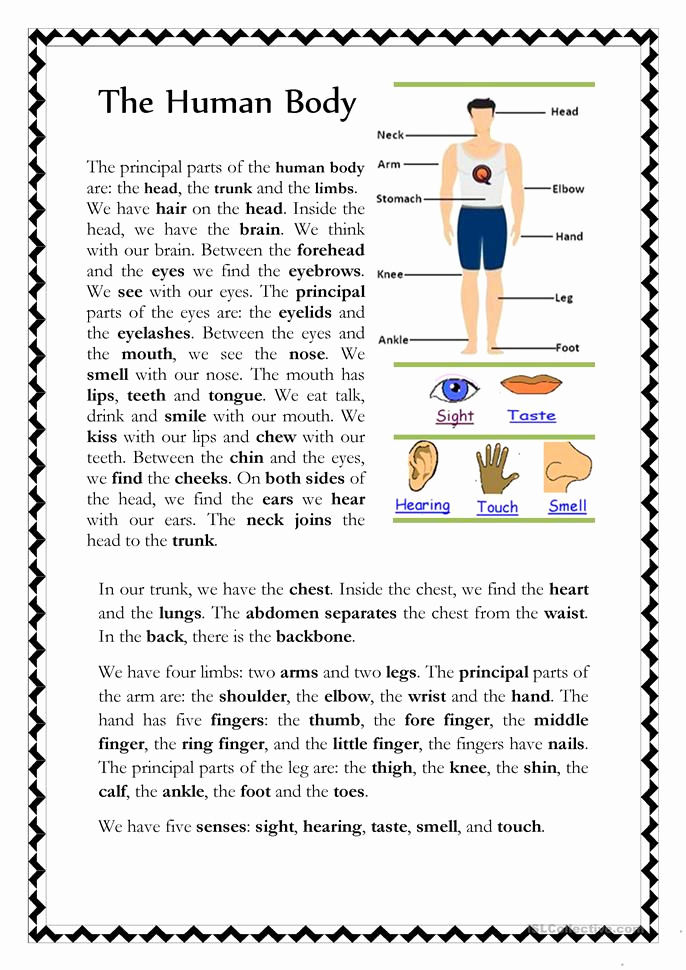 Free Human Body Worksheets Best Of the Human Body Worksheet Free Esl Printable Worksheets