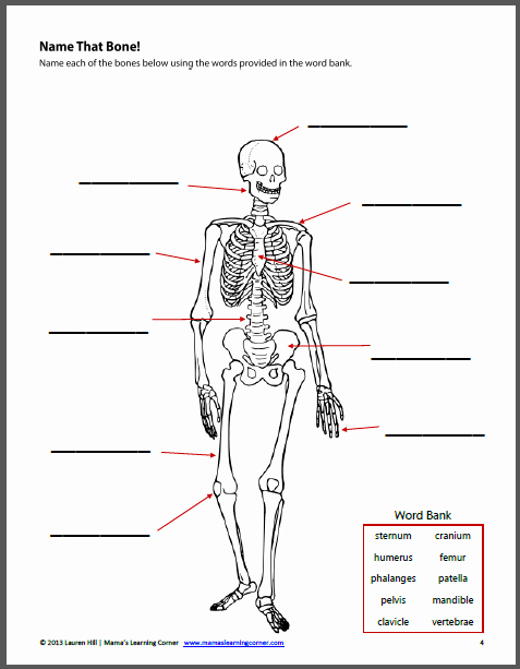 Free Human Body Worksheets Best Of the Human Body Worksheet Packet for 1st 3rd Graders