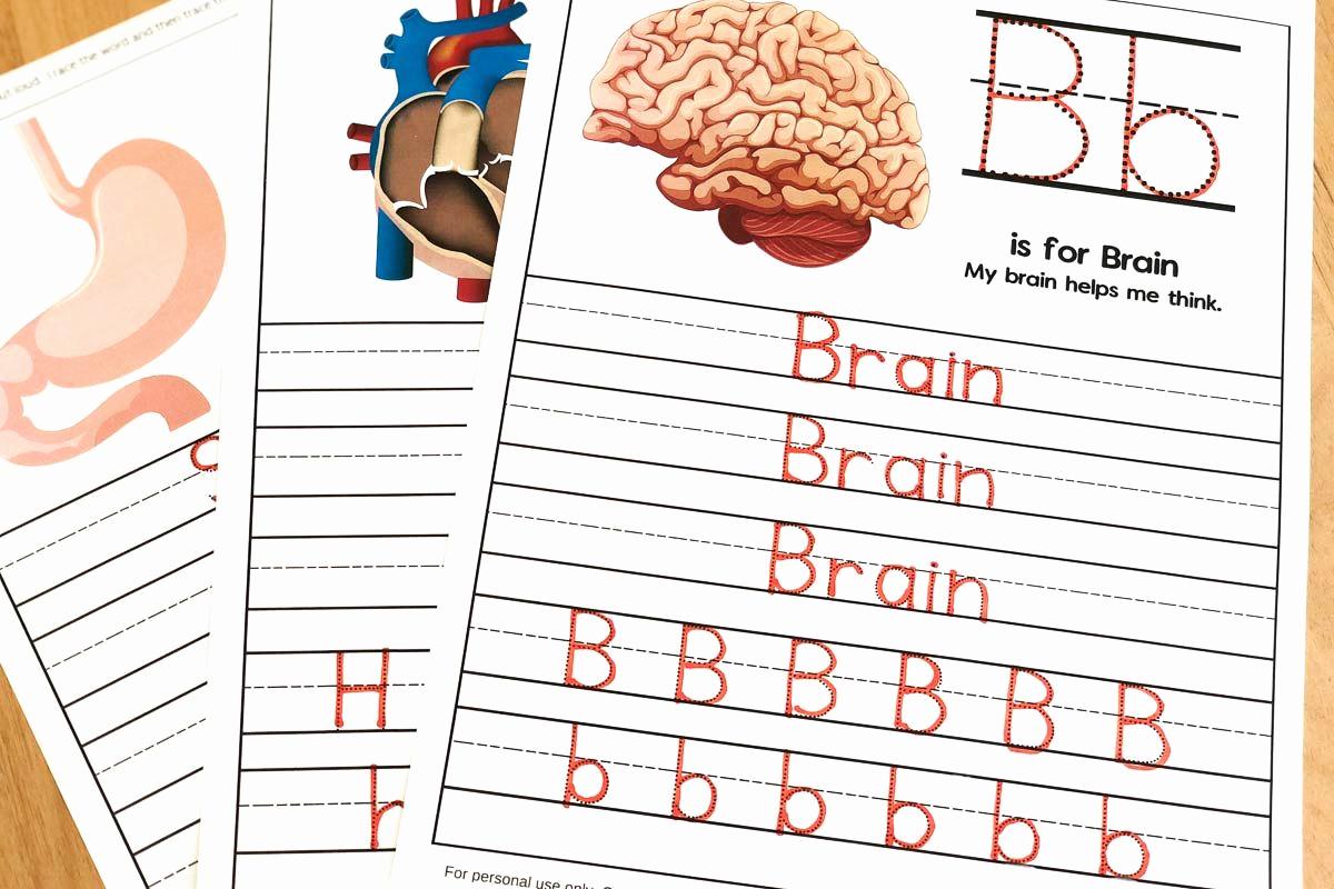 Free Human Body Worksheets Elegant Human Body Worksheets for Kindergarten & Up