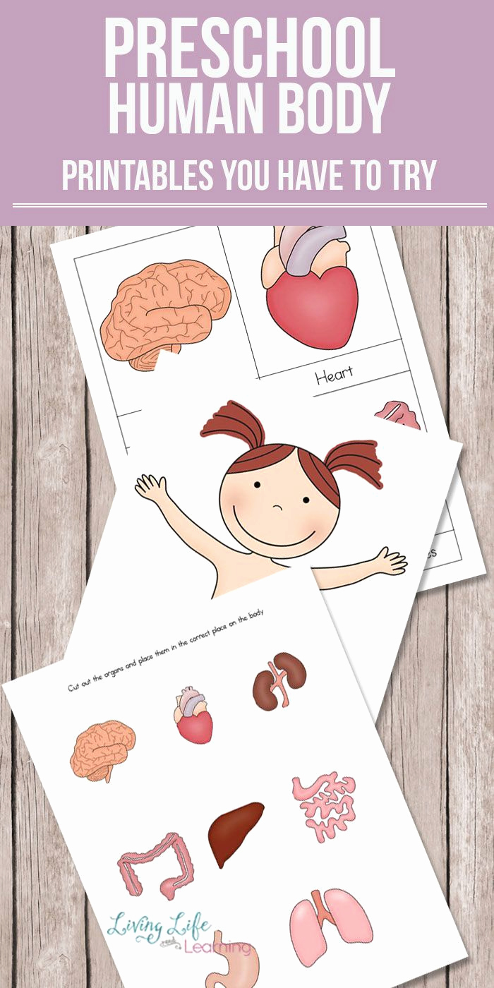 Free Human Body Worksheets Fresh Want to Learn About the Human Body but Don T Know where to