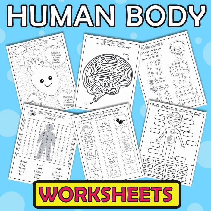Free Human Body Worksheets Inspirational Human Body Worksheets Itsybitsyfun