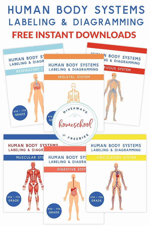 Free Human Body Worksheets Unique Free Human Body Systems Reading Prehension Science Unit