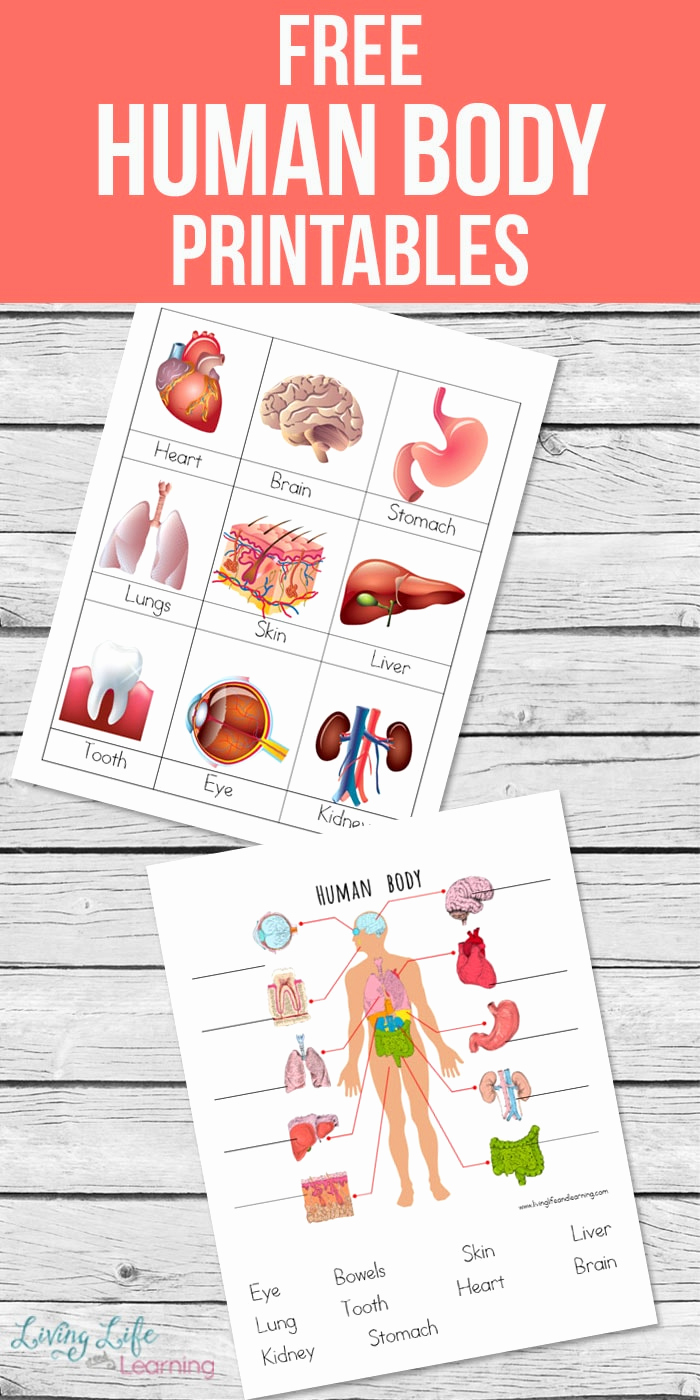 Free Human Body Worksheets Unique Human Body Printables for Kids