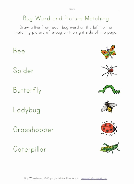 Free Insect Worksheets Beautiful Insects Worksheets Free