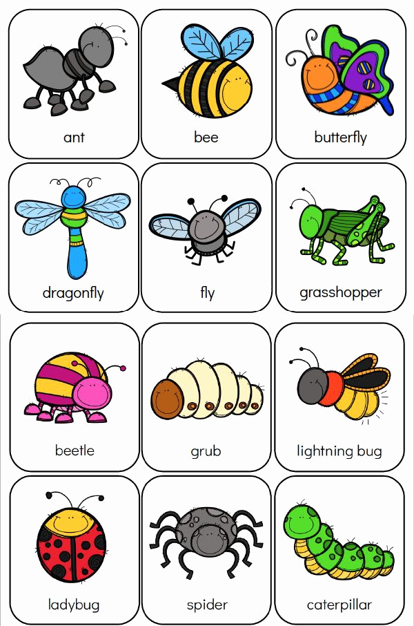 Free Insect Worksheets Beautiful Printable Preschool Bug Activities for Learning & Fun