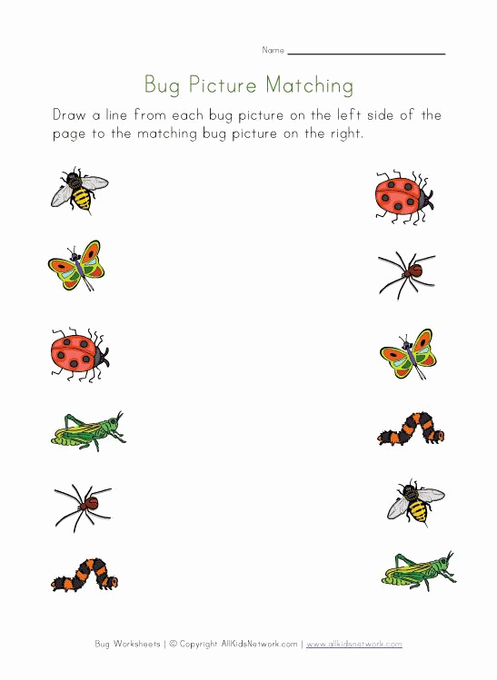 Free Insect Worksheets Inspirational Bugs Picture Matching Worksheet