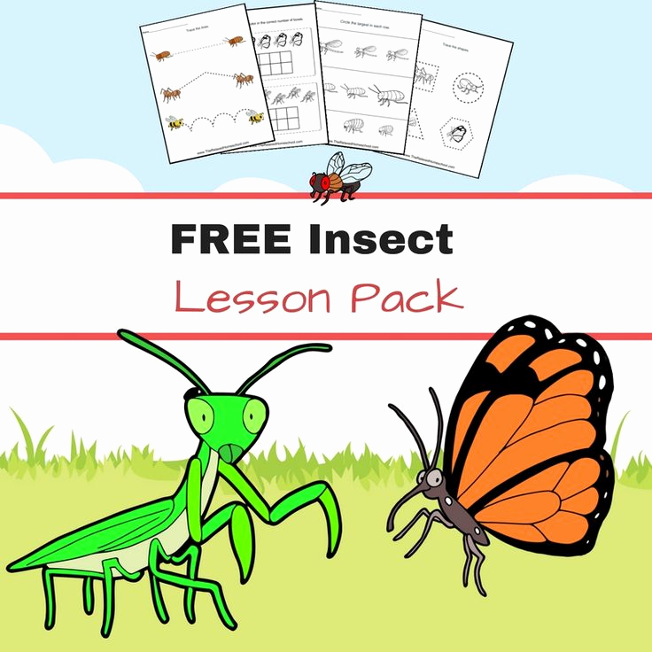 Free Insect Worksheets Inspirational Free Insect Worksheets Great for Elementary Students