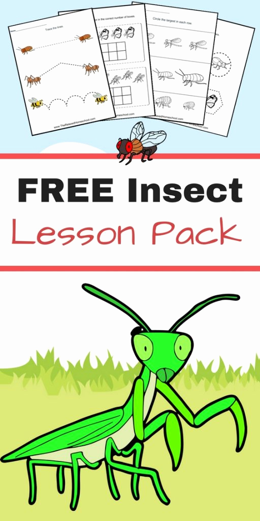 Free Insect Worksheets Lovely Free Insect Worksheets Great for Elementary Students