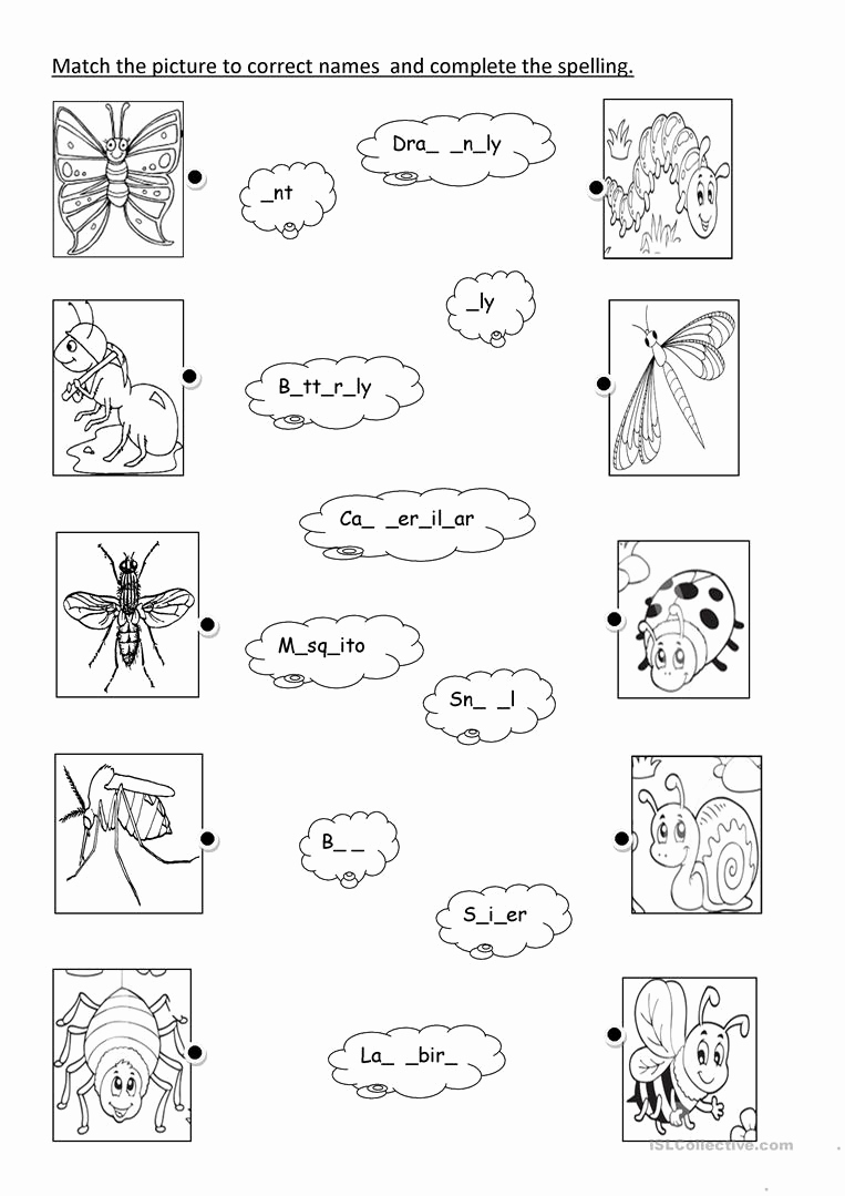 Free Insect Worksheets New Insects Worksheet Free Esl Printable Worksheets Made by