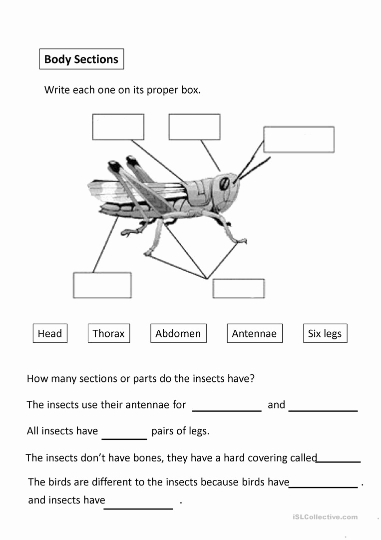 Free Insect Worksheets New Insects Worksheet Free Esl Projectable Worksheets Made