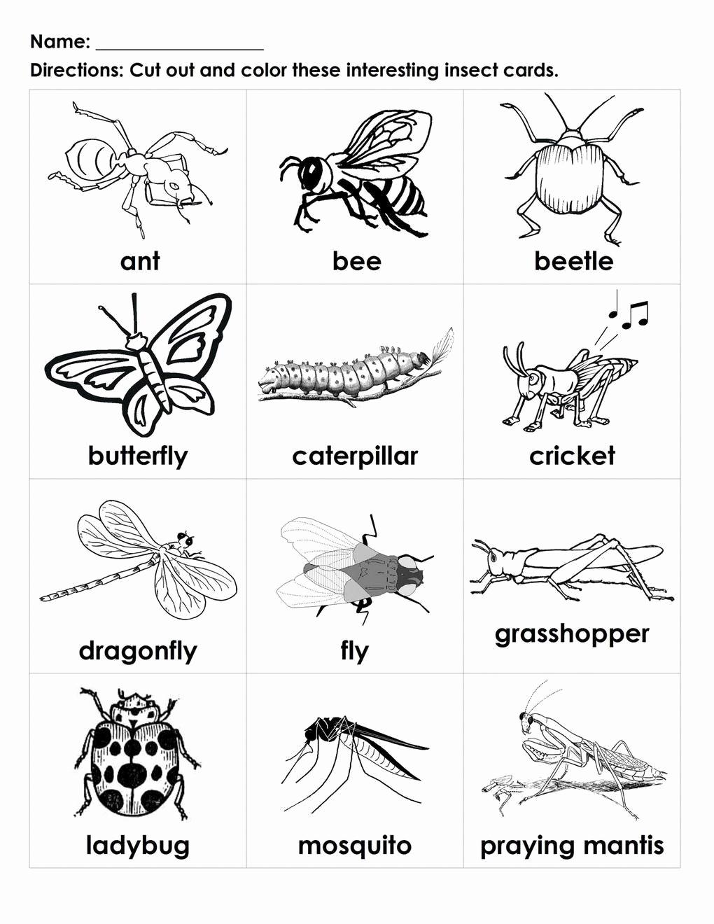 Free Insect Worksheets Unique Pin On Printable Worksheet for Kindergarten