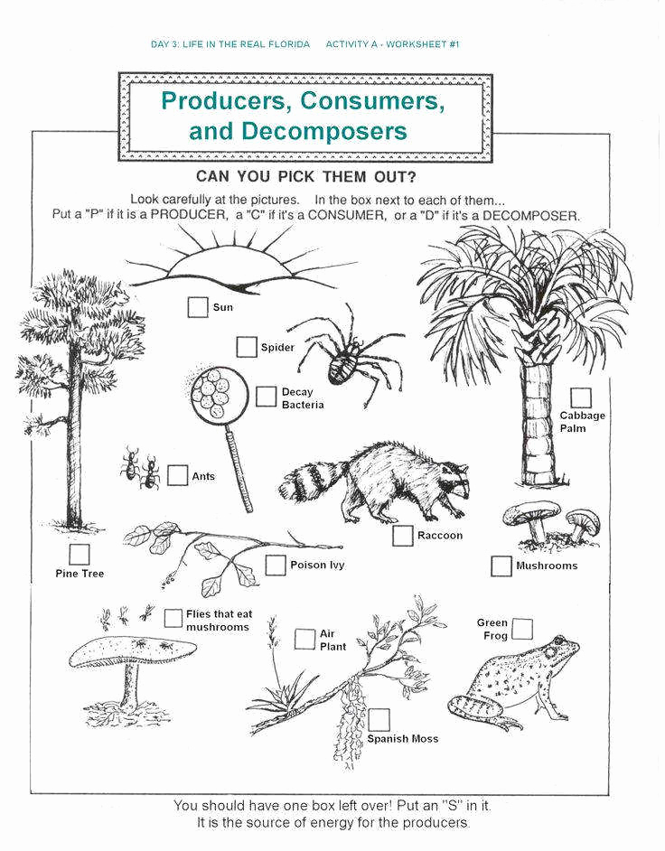 Free Printable Ecosystem Worksheets Best Of Ecosystem Worksheets
