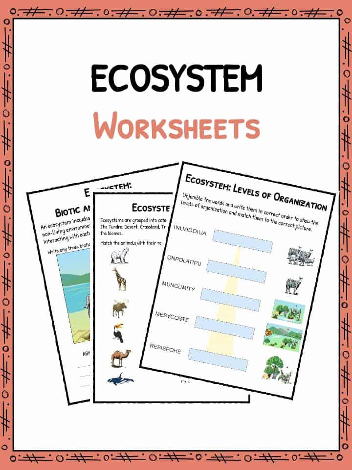 Free Printable Ecosystem Worksheets Fresh Ecosystem Worksheet
