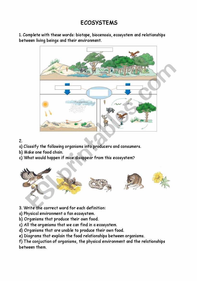 Free Printable Ecosystem Worksheets Inspirational 30 What is An Ecosystem Worksheet Worksheet Resource Plans
