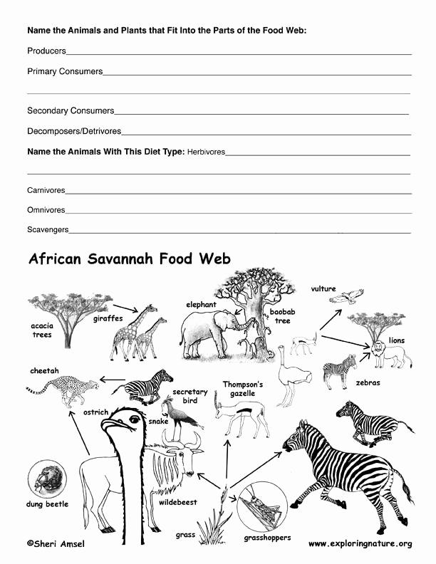 Free Printable Ecosystem Worksheets Inspirational Aquatic Ecosystems Worksheet Pdf Worksheet