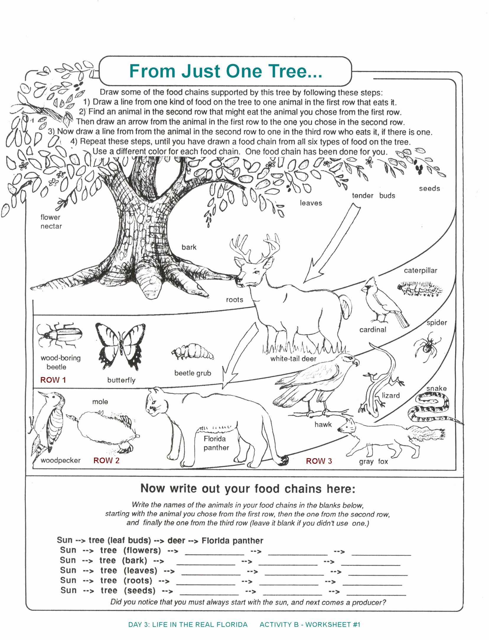Free Printable Ecosystem Worksheets Lovely 20 Free Printable Ecosystem Worksheets