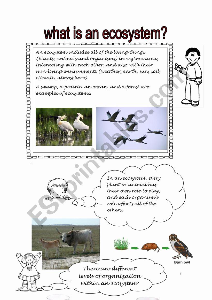 Free Printable Ecosystem Worksheets Lovely Ecosystem Esl Worksheet by Rossman2