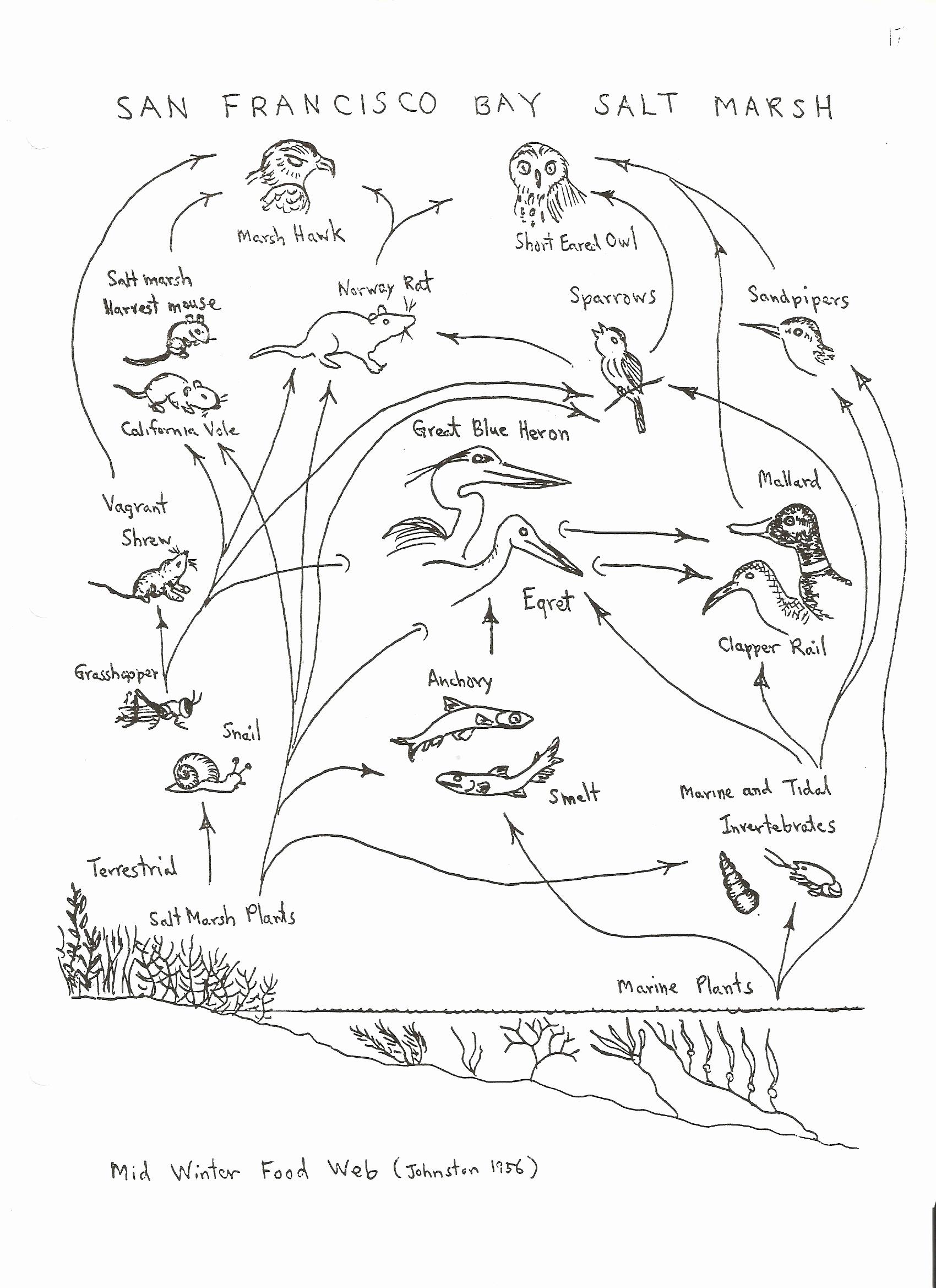 Free Printable Ecosystem Worksheets Unique Worksheet Ecology Worksheets for High School Worksheet