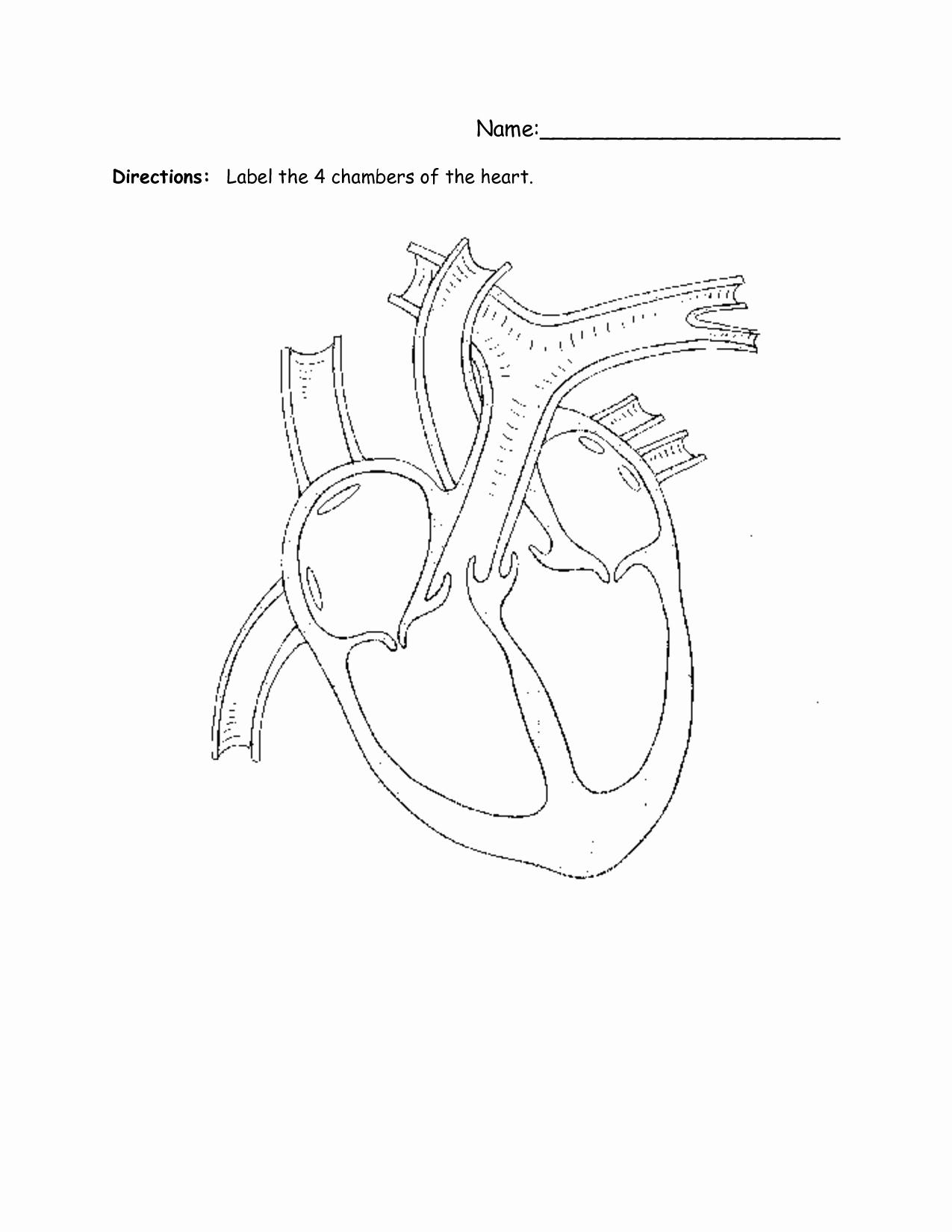 Heart Diagram Worksheet Blank Beautiful Simple Heart Diagram for Kids to Label Diagram